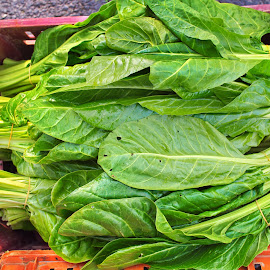 Chard vegetable fresh green leaves by Ciddi Biri - Food & Drink Fruits & Vegetables ( digestive system, green leaves, lunch, salad, freshness, vegetable, harvested, summer, agriculture, hungry, agricultural, farming, healthy food, digestion, vegetarian, cooking, diet, organic, harvest, ingredient, green, natural, nature, cuisine, raw, health, leaf, chard, dinner, lettuce, food, vitamin, nutrition, closeup, background, healthy, plant, digestive health, garden, fresh )