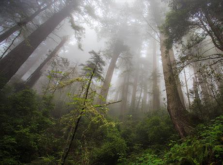 Damnation Creek Trail - 2560x1440