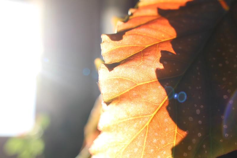 maculata al sole di ni