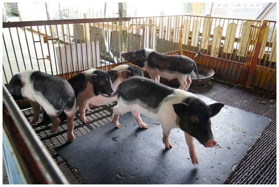 宜蘭景點推薦【廣興農場】冬山鄉親子旅遊豬哥窟與鴨母寮