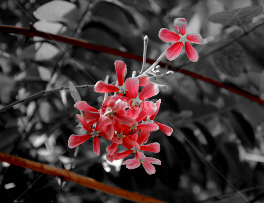 red beauty.... by प्रसाद जोशी - Nature Up Close Flowers - 2011-2013
