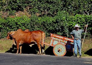 Photo: traditioneller Ochsenkarren
