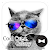 Stylish Wallpaper Cool Cat x Galaxy Theme file APK Free for PC, smart TV Download