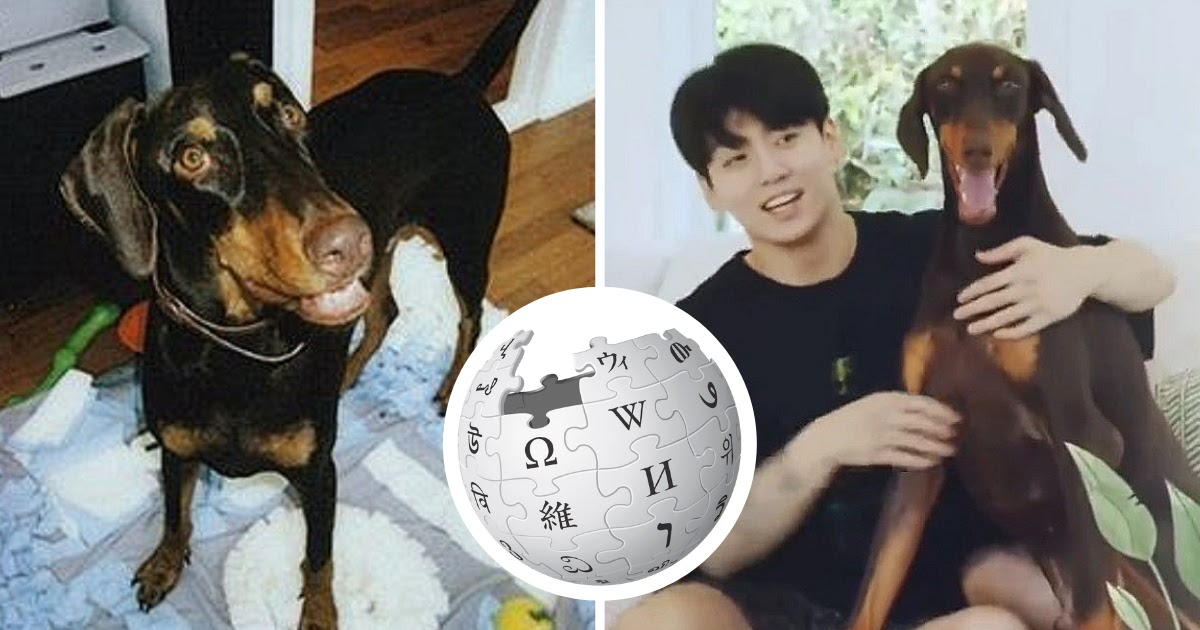 ARMYs Have Fallen In Love With BTS Jungkook's Dog Bahm, And Here's Proof Of How Famous He Really Is