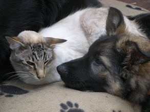 Photo: Aiki en Sinjo