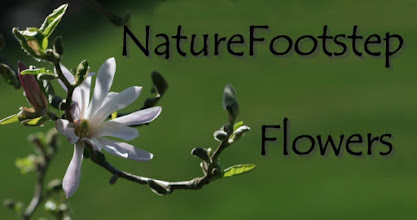 Photo: f NF Flower nfmacro.blogspot.com