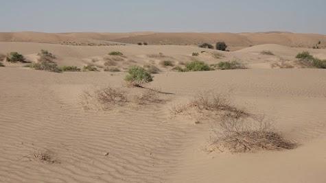Vegetation am Rand der Wahiba Wüste