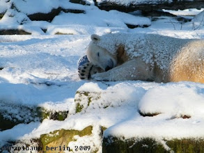 Photo: Ballkuscheln im Schnee :-)