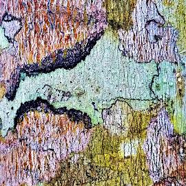 Tree Bark by Vijay Govender - Abstract Patterns ( bark, tree, abstract )