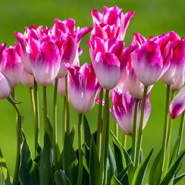 Pink on Green by Darren Sutherland - Flowers Flower Arangements