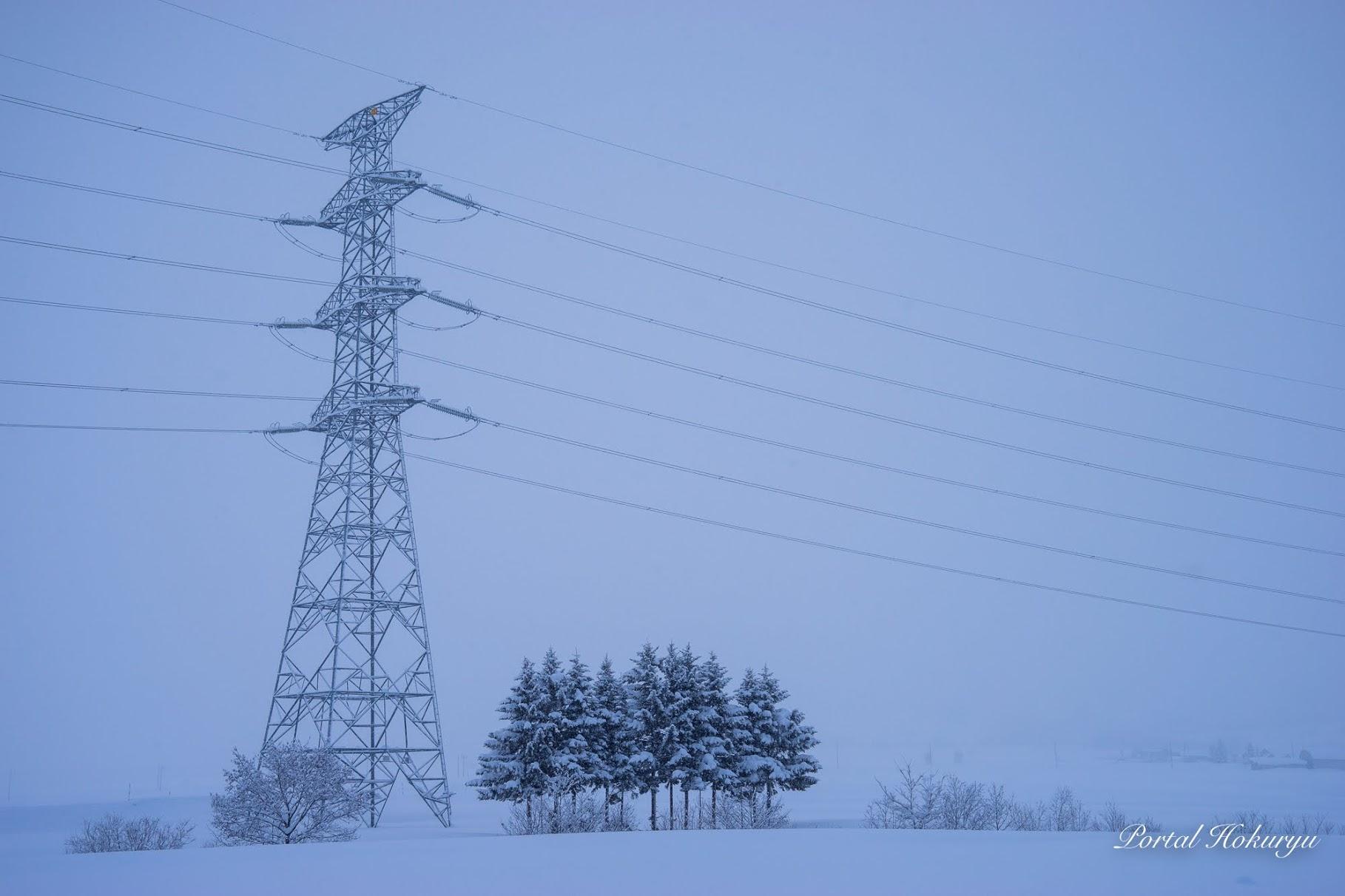 電柱と11本の木