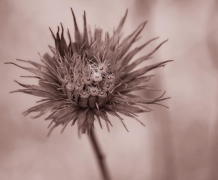 by Rajarshi Gupta - Nature Up Close Flowers - 2011-2013