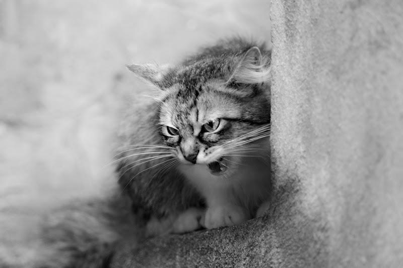 Attacco felino di utente cancellato