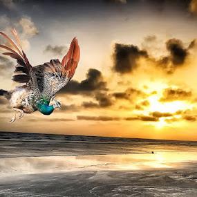 C16 by Abdul Rehman - Digital Art Animals ( beautiful, mother nature, beauty, iphoneography, natural light, pakistan, iphone,  )