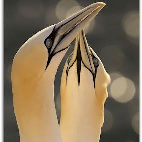 Jan van Gent by Anja Voorn - Animals Birds ( love is in the air )