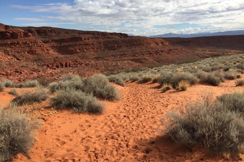 Dino Cliffs Dinosaur Tracks