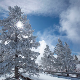 Yellowstone in winter by Jack Nevitt - Landscapes Weather ( snow, national, winter, clouds, trees, sun, yellowstone, park )