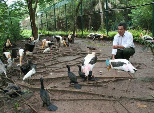 Phóng sự Vườn chim Bạc Liêu dẫn dụ chim trời