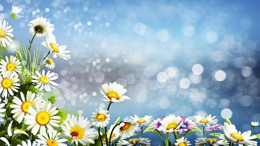 Daisy Live Wallpaper screenshot 5