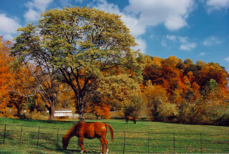 Photo: Valley Forge Farm - (scanned from a 1994 4x6 print)