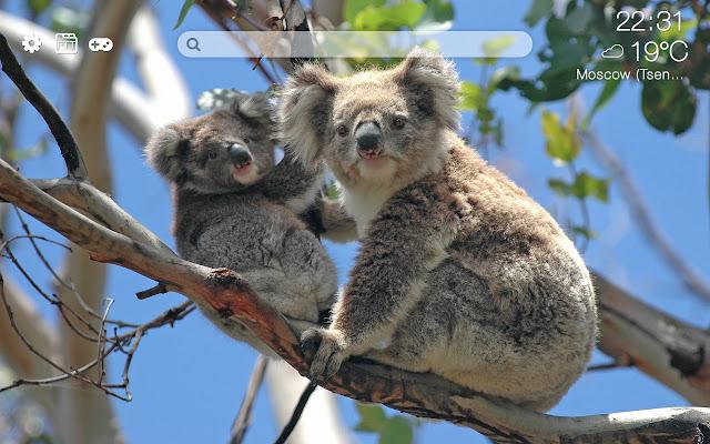 Koalas HD new free tab theme