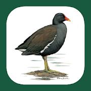 App Icon for Birds of Iberian Peninsula App in Czech Republic Google Play Store