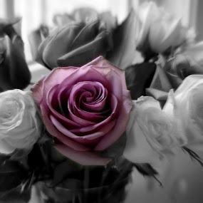 Just OneRose by Tammy Pressley - Flowers Flower Arangements ( love, valentine's, rose, roses, flowers, arrangements,  )