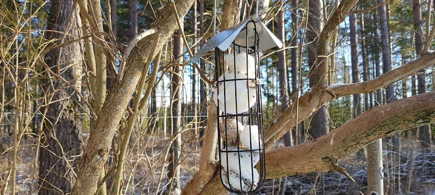 Kokosboll  som talgbollar till fåglarna