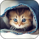 Cat Wallpapers Android apk