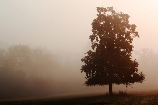 Alba di Nebbia di qba75