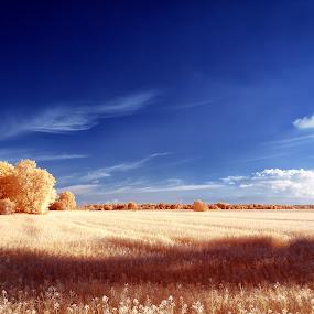 Wide fields by Thorsten Scheel - Landscapes Prairies, Meadows & Fields ( clouds, ir, blue sky, zingst, infrared, infrarot, barth )