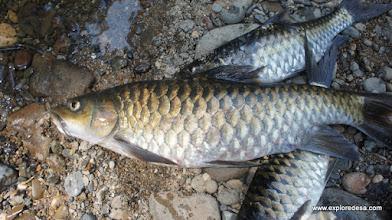 Photo: River Fish