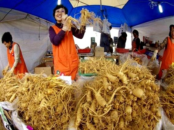 Cơ sở sản xuất sâm tươi Hàn Quốc