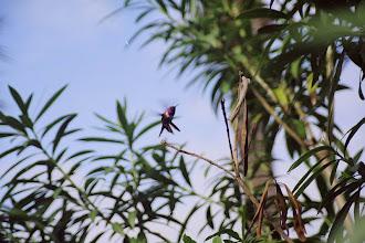 Photo: #018-Colibri
