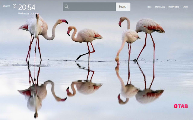 Flamingo Wallpapers New Tab Theme