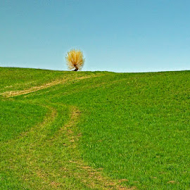 by Siniša Almaši - Landscapes Prairies, Meadows & Fields ( sky, nature, natural light, tree, spring, path, view, sunlight, light, grass, landscape, meadow, colours )