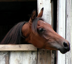 Photo: My pride and joy, Lyric, as a long yearling