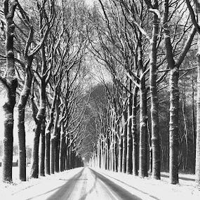 Winter morning.  by Gert de Vos - Black & White Landscapes
