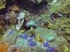 Top. Dive Sites, Kri Island, Raja Ampat, Papua. Colorful Coral