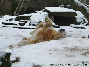 Photo: Entspannt Herumwaelzen :-)