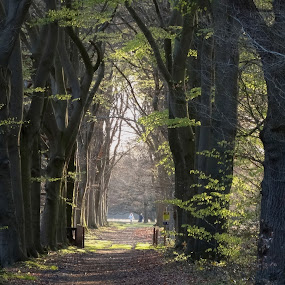 Walking in a nice lane by Gert de Vos - Landscapes Forests
