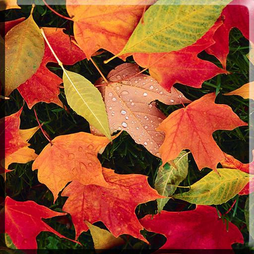 秋はビデオライブ壁紙を残します 個人化 App LOGO-APP試玩