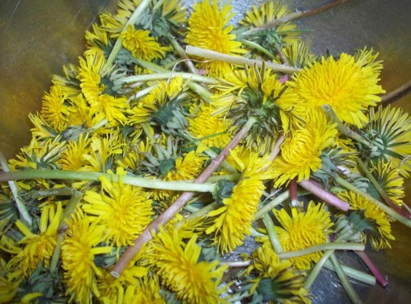 Just picked dandelions!