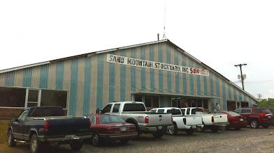 Photo: Sand Mountain Stockyards, Alabama.  Cattle auction.