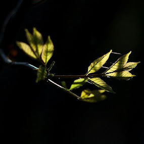 by Tiffany Bailey - Nature Up Close Leaves & Grasses