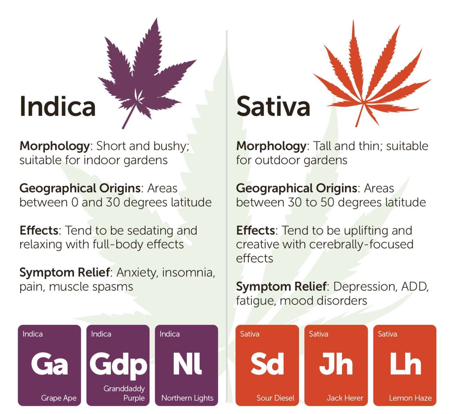 Morphology, Geographical, Effects, and Symptom Relief of Medical Marijuana