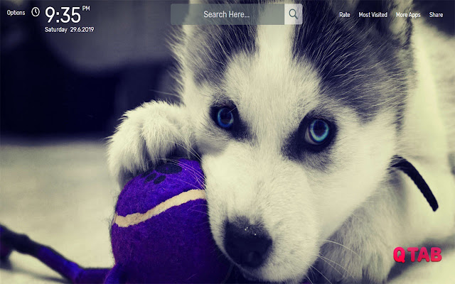 Puppies Wallpapers HD Theme