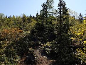 再度樹林帯へ
