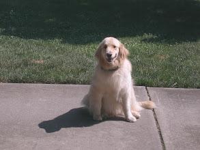 Photo: Customers Pet Pics