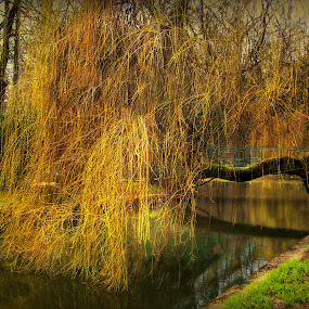 by Ksenija Bauer - City,  Street & Park  City Parks